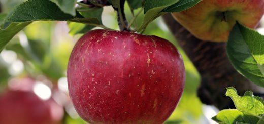 Apfelform, Bauch und Körpertypen auf maennerplanet.de